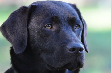 Hundeschule Greiz Hohenleuben Labrador Schäferhund Altdeutscher Schäferhund Fichtlmeier Fichtlmeier Gera Zeulenroda