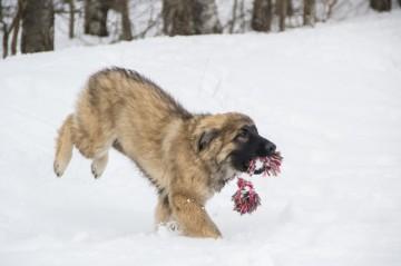Hundeschule Greiz Hohenleuben Apportieren Schäferhund Altdeutscher Schäferhund Fichtlmeier Fichtlmeier Gera Zeulenroda