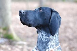 Hundeschule Greiz Hohenleuben Junghunde Schäferhund Altdeutscher Schäferhund